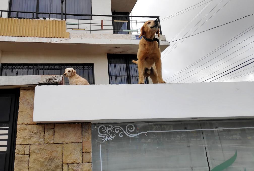 Lloyd le chien nous dit aurevoir à Riobamba