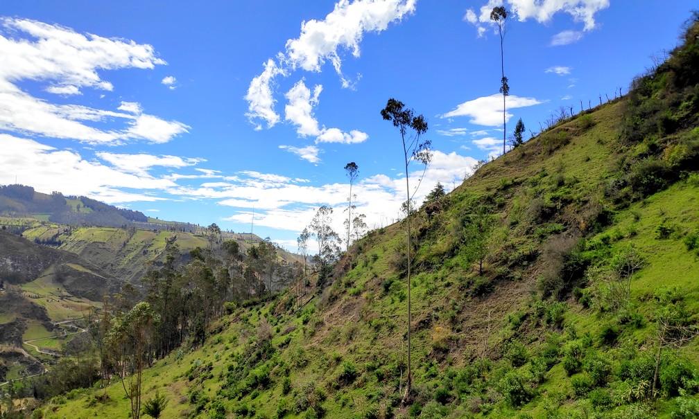 Prairie verdoyante sur flac de montagne en Équateur