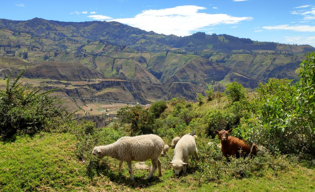 Panorama sur les montagnes avec deux moutons et une chèvre en 1er plan