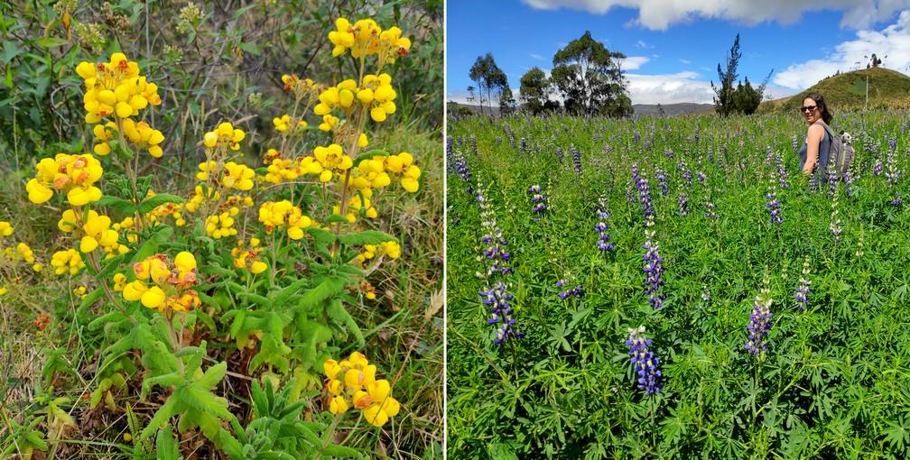 Fleurs sauvages jaunes et violettes dans un pré