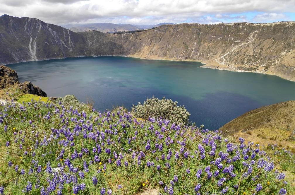 Vue sur la lagune de Quilotoa avec des fleurs sauvage violettes en premier plan