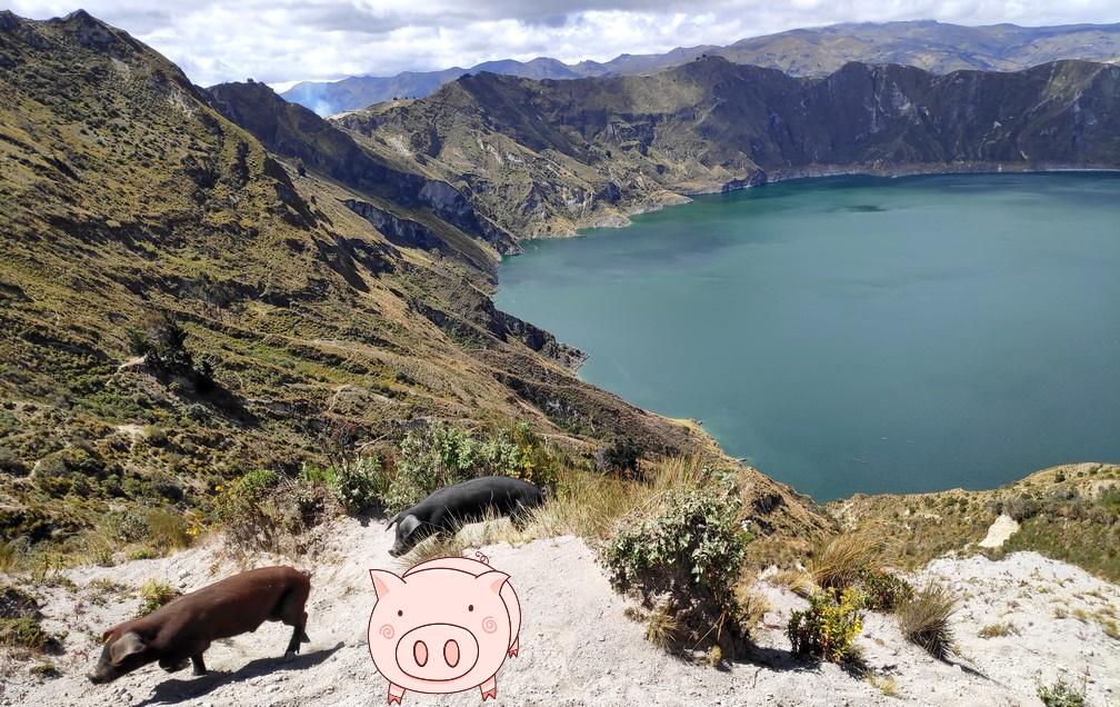 Vue sur la lagune de Quilotoa avec un petit cochon en 1er plan