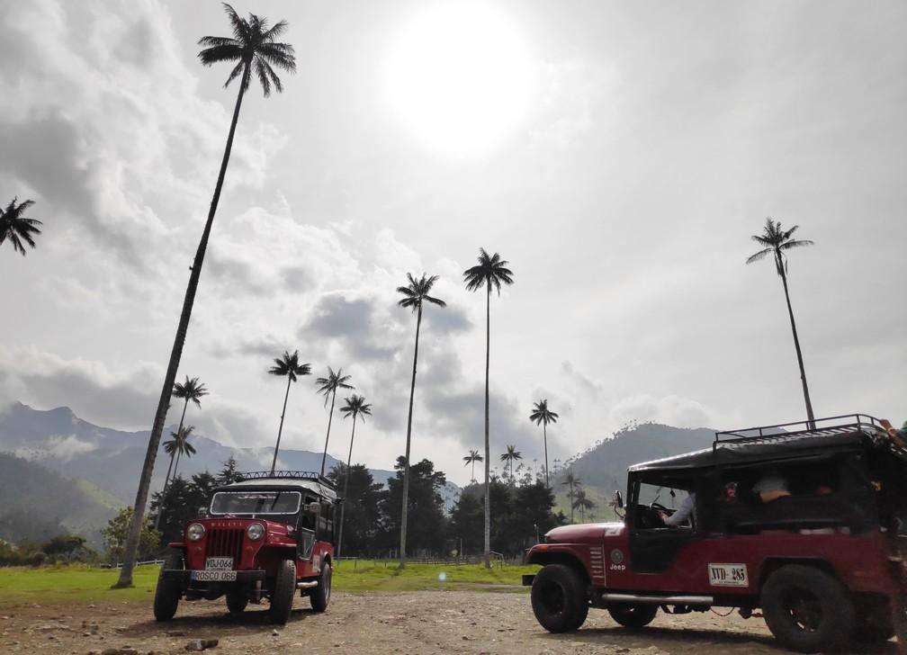 Plusieurs palmiers géants et deux Jeep Willis garée sur un parking