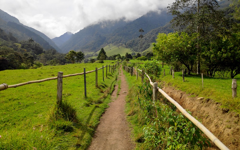 Sentier de randonnée dans la vallée de Cocora
