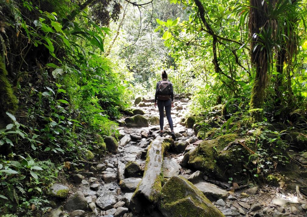 Sentier au milieu de la jungle dans la vallée de Cocora