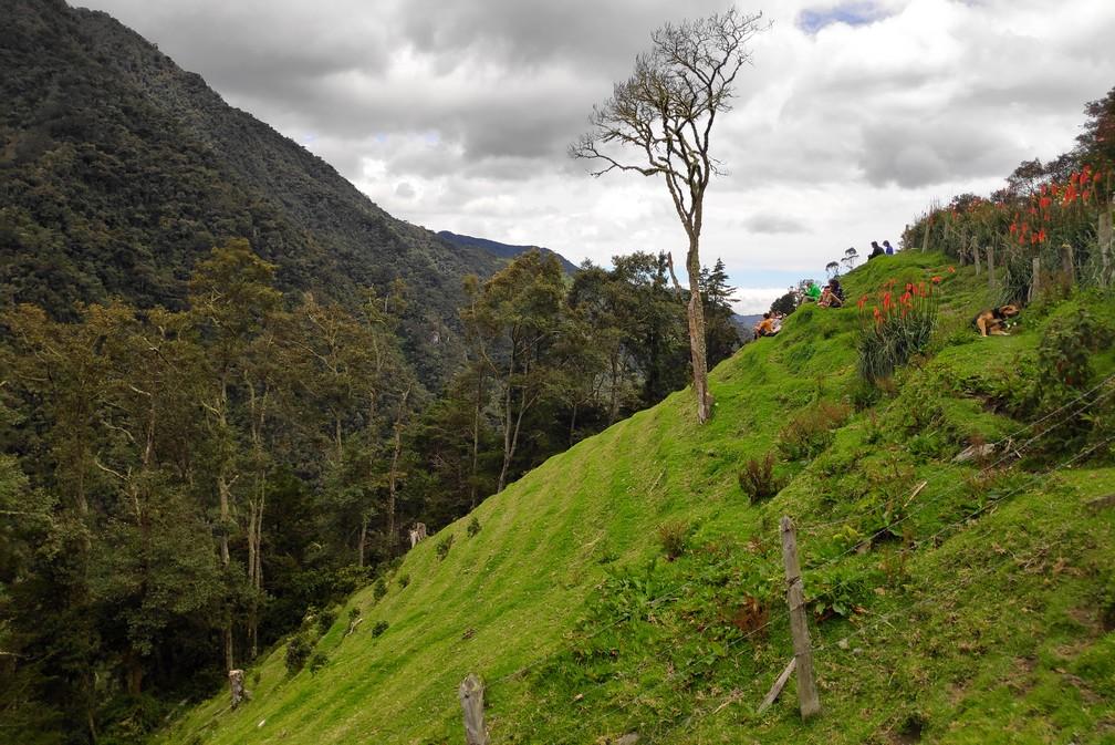 Arbre poussant sur un flanc de colline verdoyant dans le centre de la Colombie