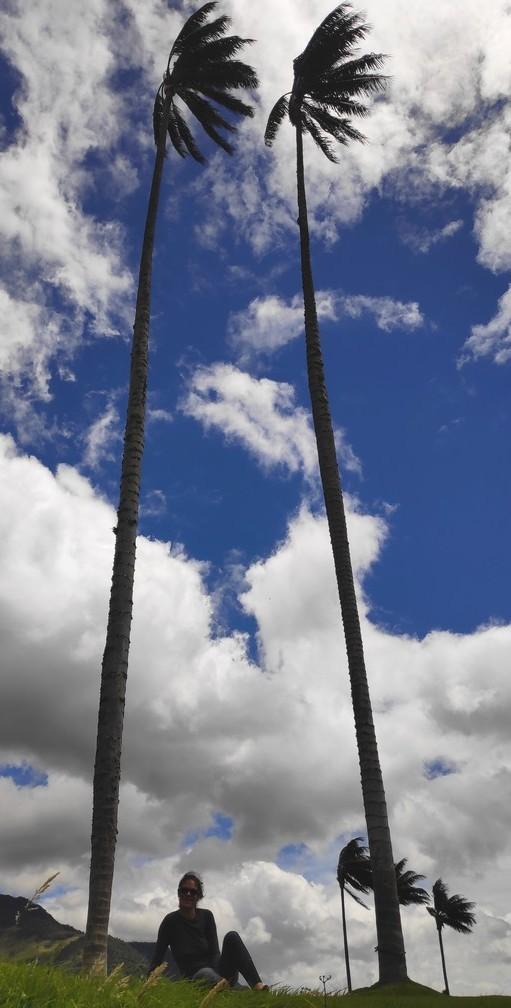 Deux palmiers géants et Salomé assise à leurs pieds pour l'échelle