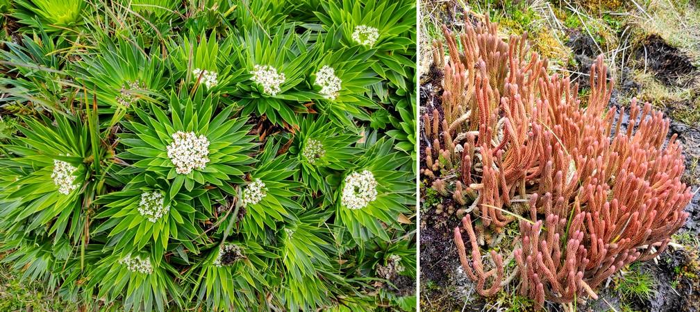 Plantes intriguantes au parc de La Lajas près de Cuenca