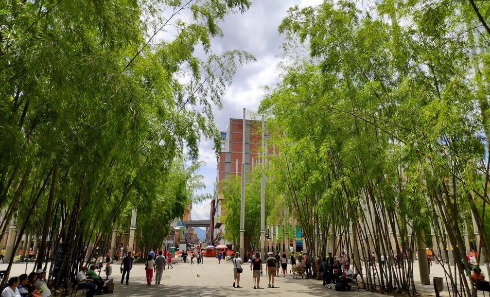 Les bambous de la Plaza Cisneros à Medellin