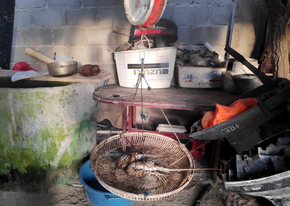 Pesée de langoustines sur une balance très rustique à Rincon del Mar