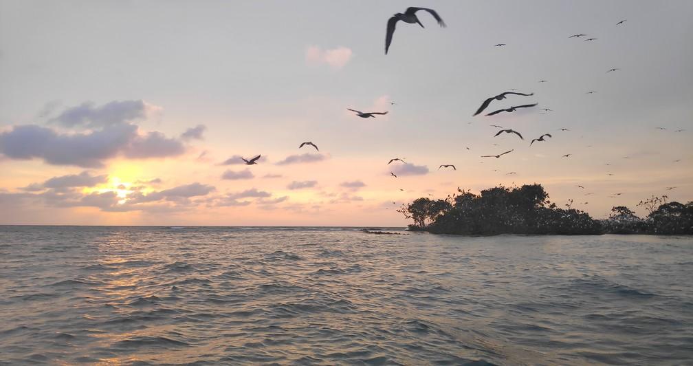 Coucher de soleil sur l'île aux oiseaux de Rincon del Mar