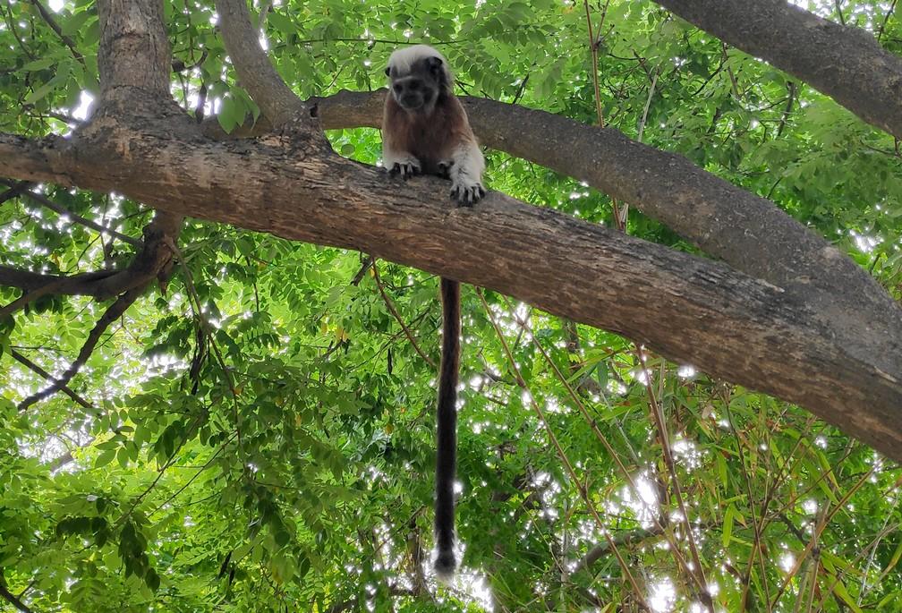 Singe perché dans un arbre du Parque Centenario de Carthagène