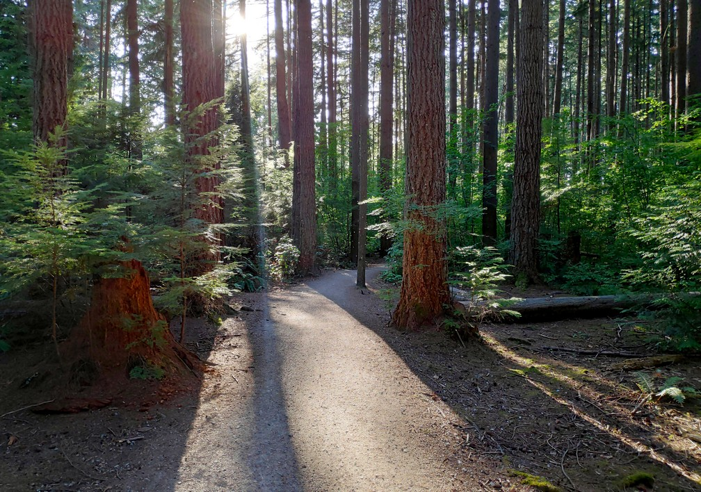 Spanish Trails dans Pacific Spirit Regional Park à Vancouver