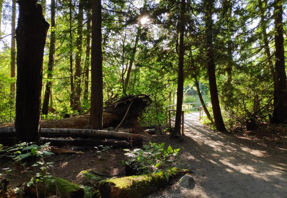 Arbres à contre-jour sur la Spanish Trails à Vancouver