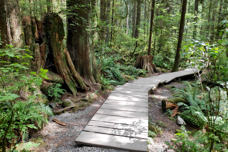 Chemin en bois à Lynn Canyon