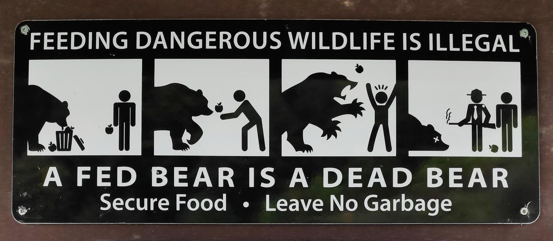 Illustration de prévention pour les ours