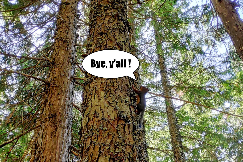 Ecueuil qui dit Bye