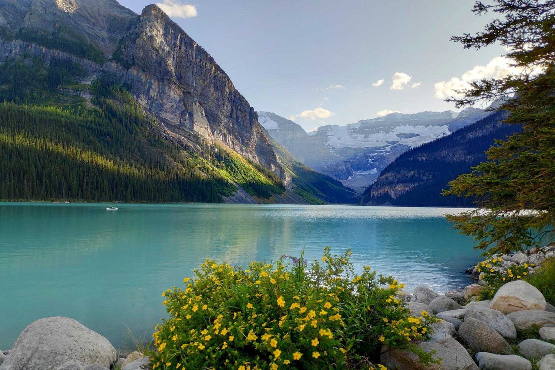 Fleurs devant le Lake Louise avec montagne en fond