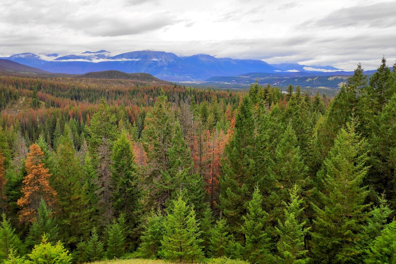 Panorama depuis le sentier 7h près de Maligne Canyon