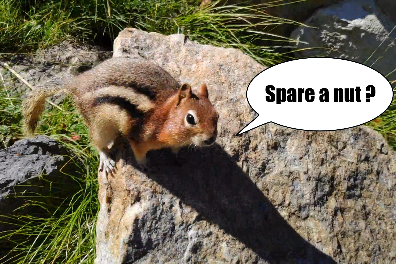 Chipmunk en quête d'une noix